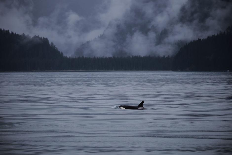 alaska-seward-orque-kenai-peninsule
