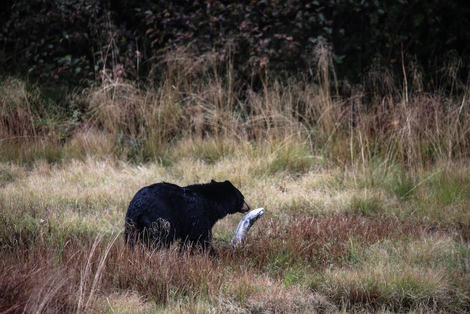alaska-seward-ours-wildlife