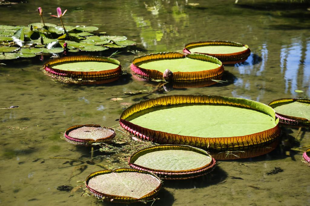 rio-de-janeiro-bresil-jardim-botanico