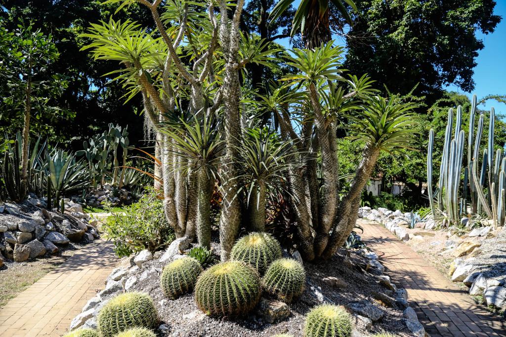 rio-de-janeiro-jardim-botanico-bresil