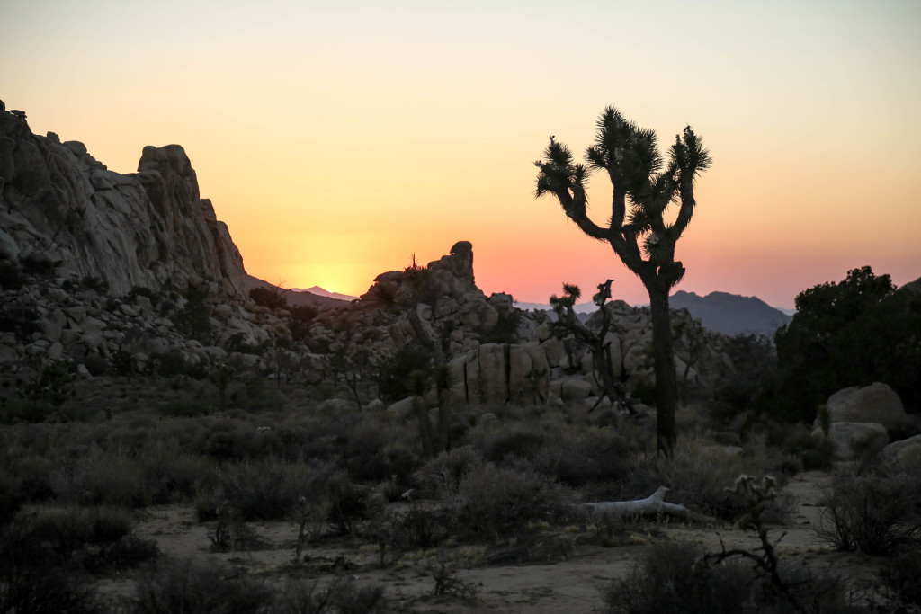 joshua-tree-national-parc-california-sunset