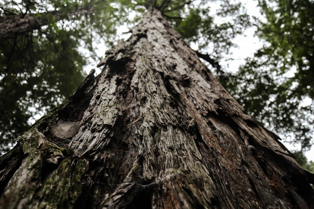 muir-wood-san-francisco-park