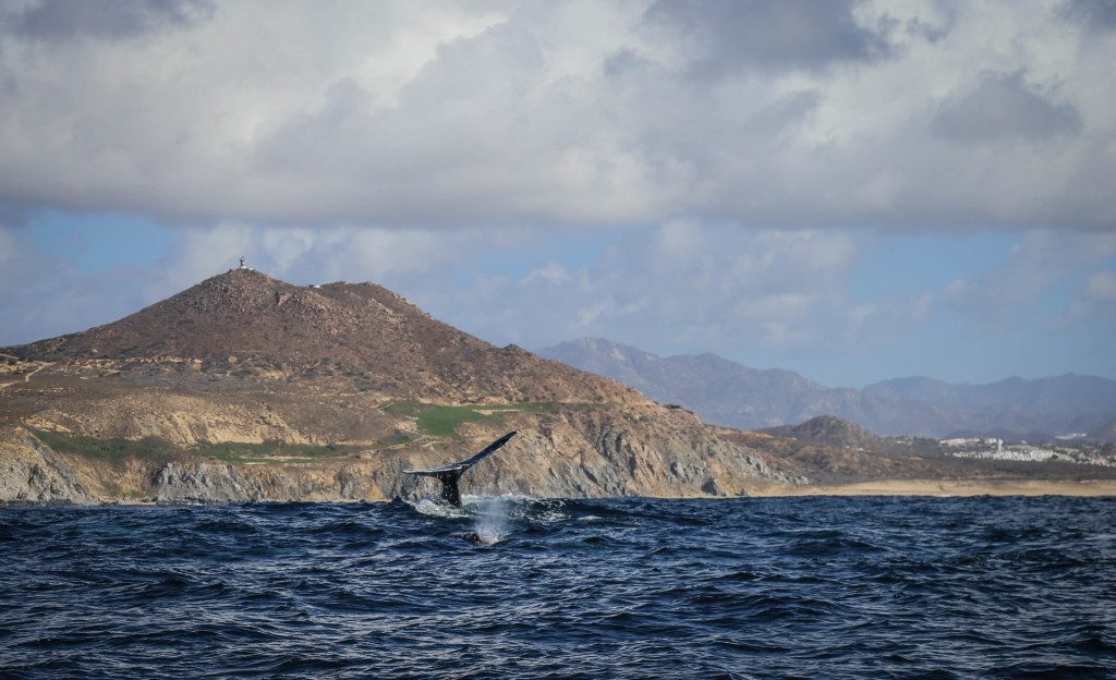 cabo-san-lucas-mer-cortez-baleines-mexique