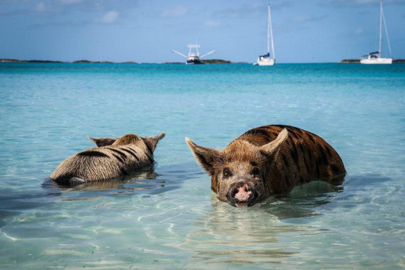 EXUMAS : Le paradis des Bahamas