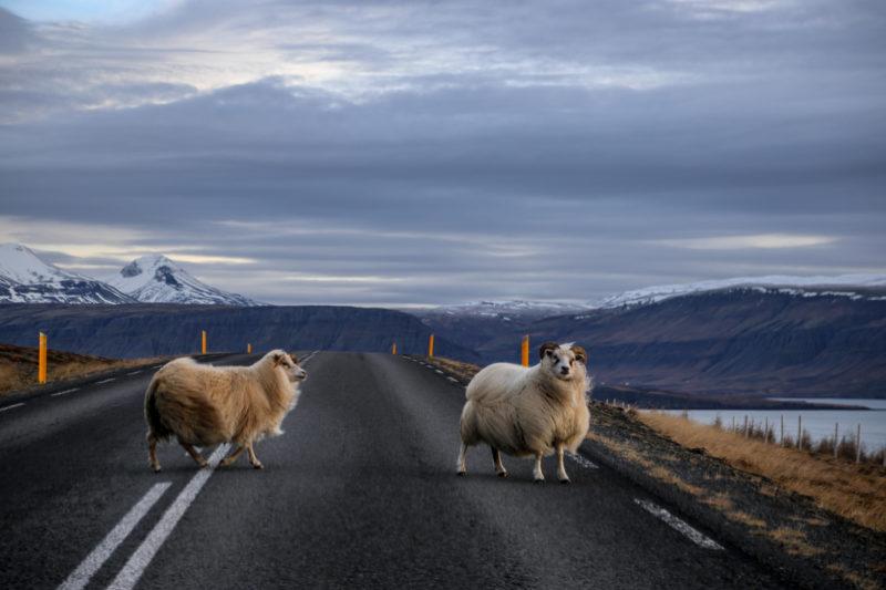L'Islande en hiver : road trip de 7 jours